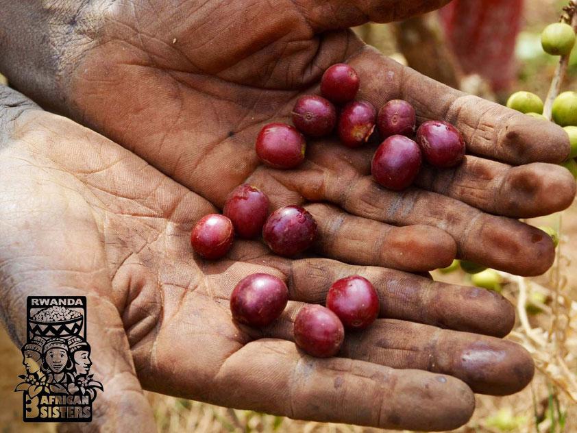 Káva Rwanda Simbi - 3 AFRICAN SISTERS